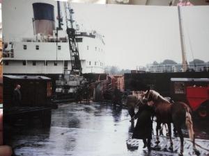 Slieve Bawn in Waterford 1964. Loading horses and cattle for Fishguard. C/O